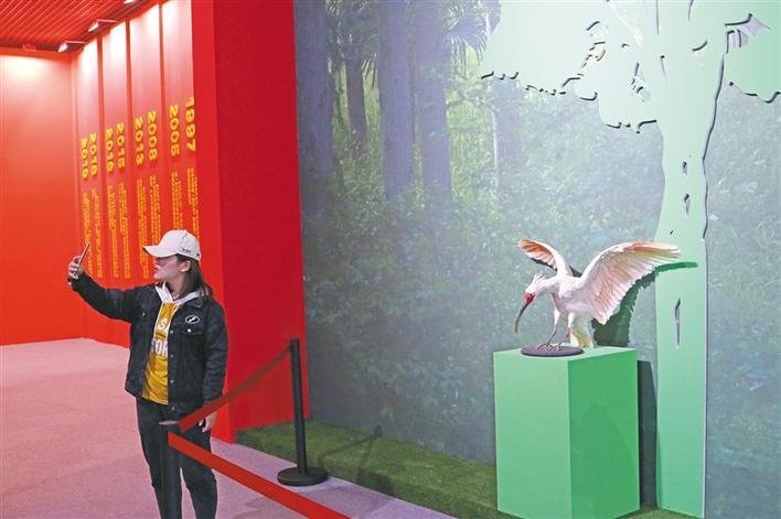 """新中国成立70周年故事——寻找故事中的你 朱鹮""""沉浮""""记"""