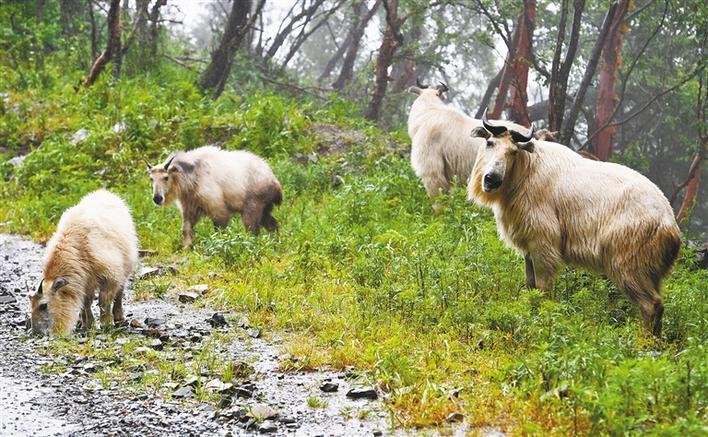 美丽陕西进行时|保护野生动物,严些,再严些