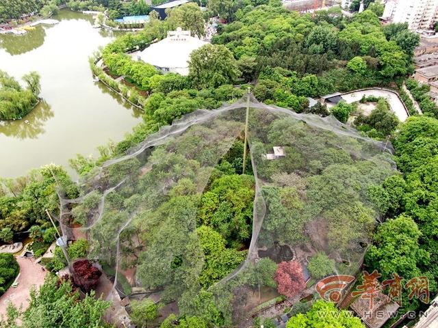 鸟语林:西安人别担心!兴庆公园鸟语林上空破大洞,里面的鸟不会飞走