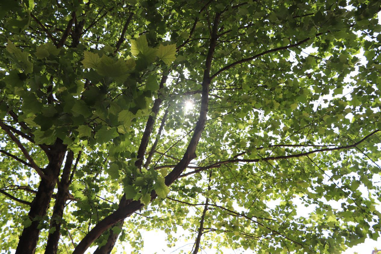西安欧亚学院人居环境学院2020届毕业论文(设计)答辩工作顺利开展