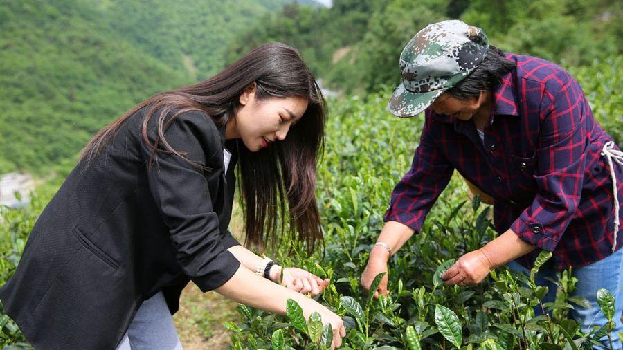 岚皋85后女子返乡创业 改造老茶园种新茶 陪着父母乐享山村生活
