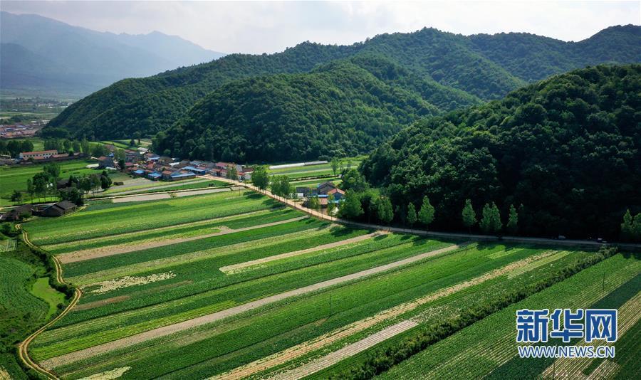 (经济)(5)陕西太白:秦岭高山蔬菜走出大山