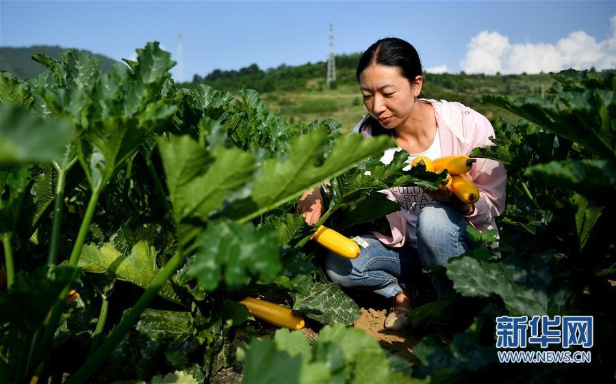 (经济)(3)陕西太白:秦岭高山蔬菜走出大山