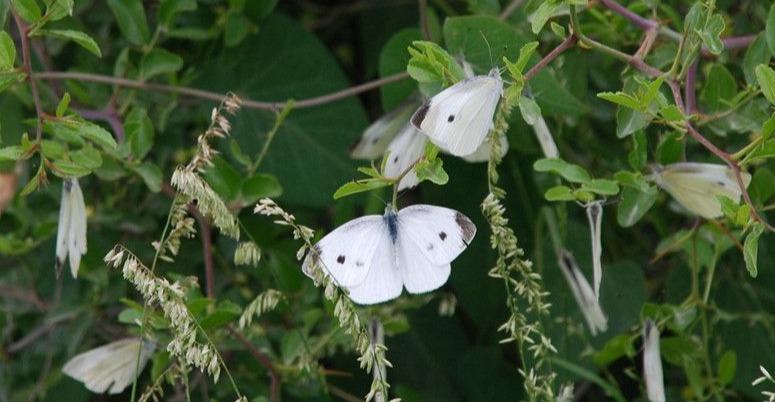 你知道西安秦岭有多少种蝴蝶吗?绝对超出你的想象