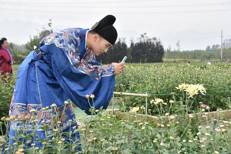 采菊东篱下悠然见南山  500余种菊花在鄠邑区竞相绽放