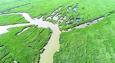 七里海,津东60里的候鸟驿站