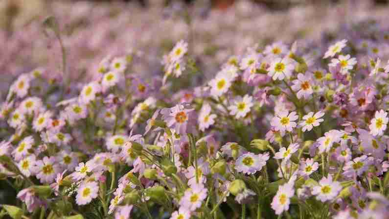 西安植物园2月27日恢复开园 实用赏花攻略请查收