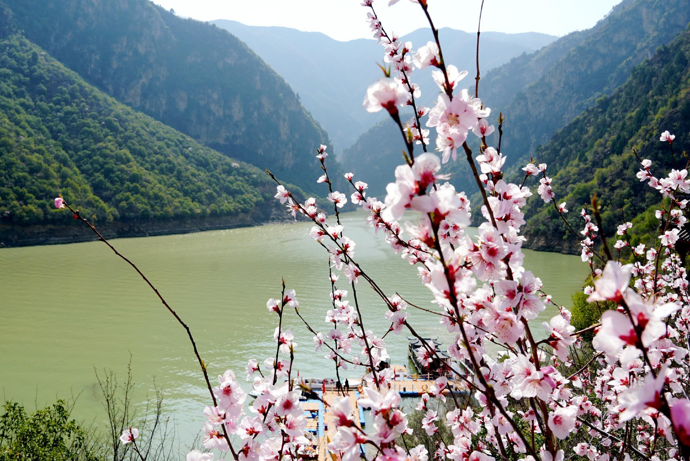 【春天里的陕西】郑国渠旅游风景区:山桃花如约绽放美如画