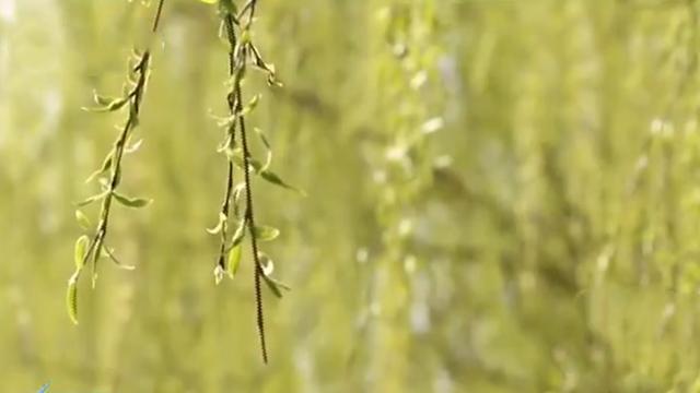 湿地公园 春风十里赏花路