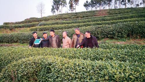 绿色生产 节本增效