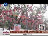 天天农高会 (2019-10-06)