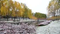 半城細雨半城雪 西安迎來入冬初雪