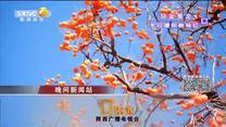 晚间新闻站 (2019-12-05)