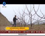 天天农高会 如何选择优质的大樱桃苗木