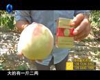 天天农高会 (2020-02-06)