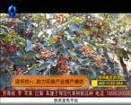 天天农高会 (2020-03-12)