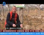 天天农高会 (2020-04-13)