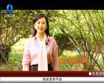 天天农高会 (2020-04-17)