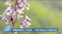"""【""""五個扎實""""譜新篇 追趕超越再出發】生態環境改善 秦嶺發現多種新的動植物物種"""