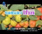 中国农资秀 (2020-05-12)