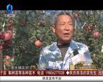 天天农高会 (2020-05-19)