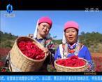 中国农资秀(2020-05-26)