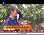 天天农高会(2020-05-26)