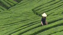 [农村大市场] 南郑:多产业发展助脱贫