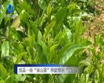 """农村大市场 别具一格""""雨山茶"""" 李家湾村""""黄金叶"""""""