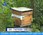 """农村大市场 秦岭:中蜂养殖酿就""""甜蜜""""产业"""