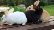 [农村大市场]  好赚钱的伊拉肉兔