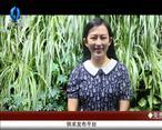 天天农高会 (2020-07-07)