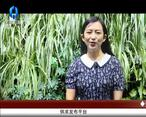 天天农高会 (2020-07-08)