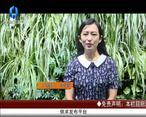 天天农高会 (2020-07-09)