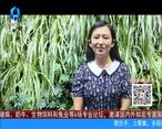 天天农高会 (2020-07-10)