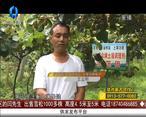 天天农高会(2020-07-13)