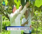 农村大市场 专家下乡为农服务 猕猴桃产生提质增效