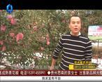 天天农高会 (2020-07-16)