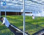 农村大市场 秦草:扎根沃土 为陕西生态添新绿