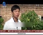 天天农高会 (2020-07-23)