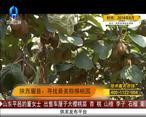 天天农高会 (2020-07-27)