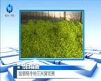 农村大市场 远销海外的正兴黄花菜