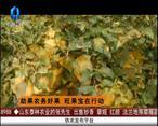 天天农高会 (2020-08-05)