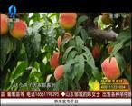 天天农高会 (2020-08-20)