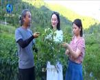 农村大市场 汉滨供销:多措并举 绘就乡村振兴新蓝图