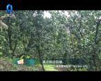 中国农资秀(2020-09-25)
