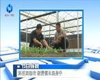 农村大市场 科技团助农 教授镇长显身手