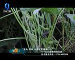中国农资秀 (2020-10-1)