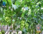 中国农资秀 (2020-10-21)