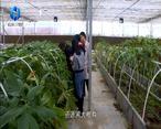 农村大市场 科技助力 安康小魔芋变致富大产业